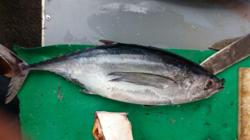 tiradito de atum 1
