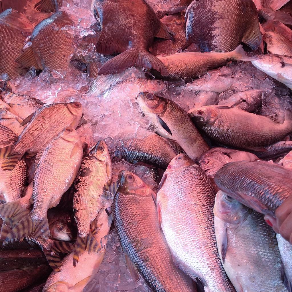 peixes em Roraima