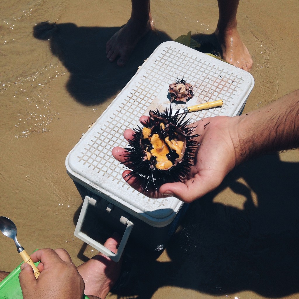 ouriço na praia